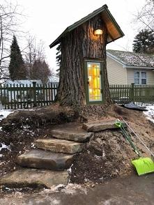 Mini biblioteka. Mądre drzewo, topola (populus) 110 lat życia i nadal korzeni...