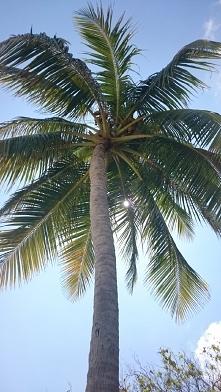 uwielbiam palmy
