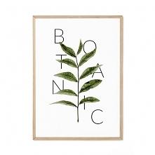 Plakat - Botanic