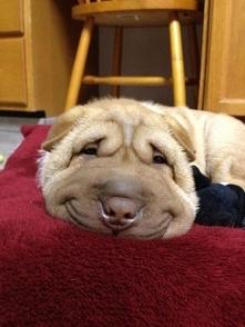Uśmiech każdemu pasuje. Sobota, niedziela, poniedziałek...