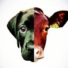 Szanujmy zwierzaki z tą samą troską <#