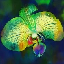 Taki kwiat