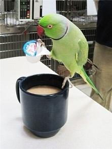 Mleczko do kawy?