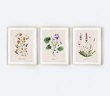 3 ilustracje botaniczne | A3