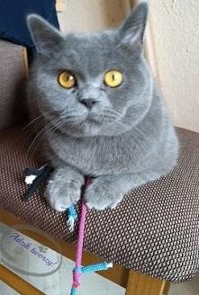Dlaczego koty się bawią? Czy zabawa odgrywa rolę tylko u kociaków, czy także ...