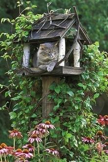 Czekam na ptaki z ciepłych krajów pilnując porządków wiosennych.