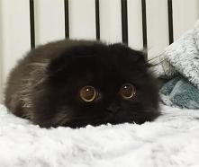 Gimo - najslodszy kot na świecie :)