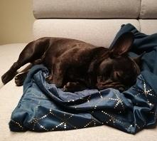 Śpiący Królewicz na miękkim...