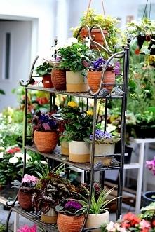 Półka na kwiatki