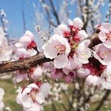 W końcu widać wiosnę! Sady ...