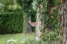 ogród, hamak