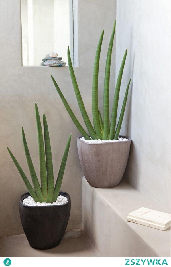 kwiaty nawet w łazience <3