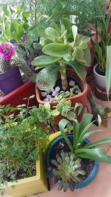 Plants o poranku.