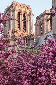 Notre Dame </3 ;(