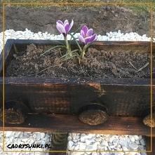 Drewniana donica na kwiaty ...