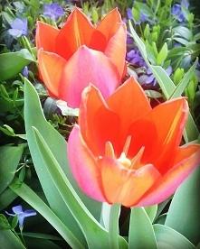 Ach ta wiosna #springishere...