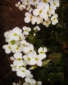 #flowerphoto #flowers #inst...