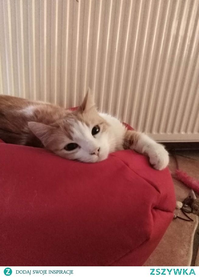 #redcat #teddymaus #sweet #europejski #mylove #myboy #12yersold