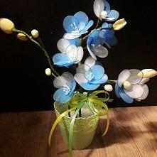 kwiat z rajstop - żółto-nie...