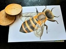 """""""Pszczółka"""" Kredki na gładkim papierze Kartka A4 Czas pracy: 4 godziny"""