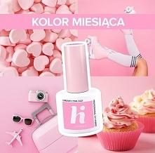 221 Creamy Pink od HiHybrid! <3  -20% na ten piękny róż Hi Hybrid :) Dziel...