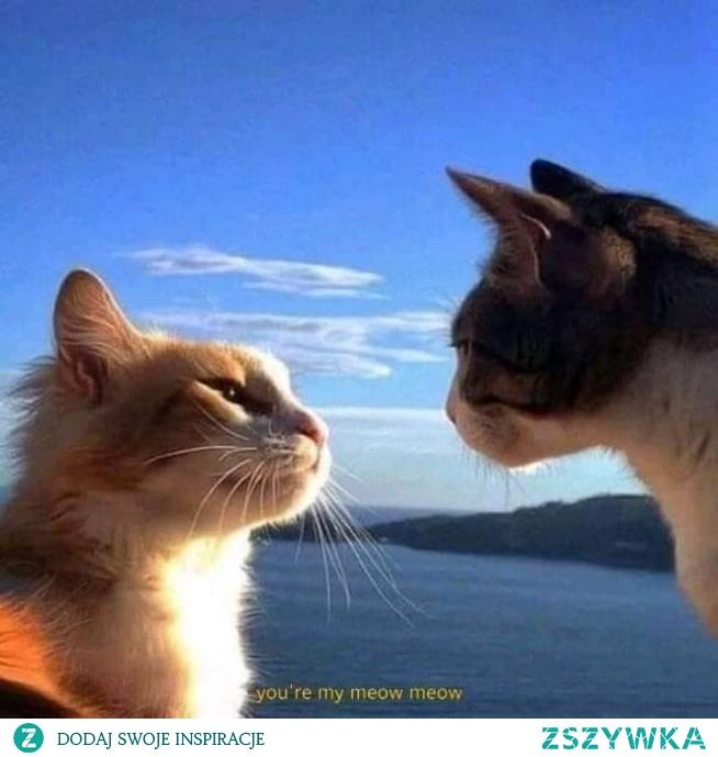You're my meow meow meow .... Hehehe