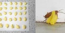 Jak pozbyć się karaluchów n...