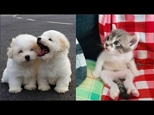 Cute baby animals Videos Co...