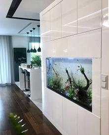 Home akwarium
