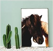 Plakat Horse/4