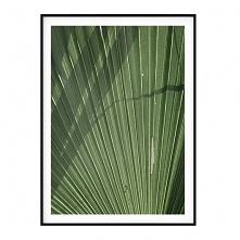 Autorski plakat botaniczny ...
