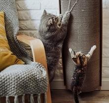 Bellycat
