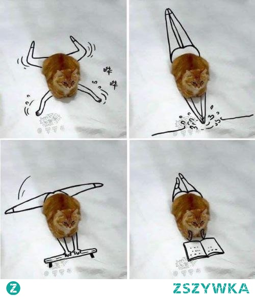 Świetny pomysł na fotografowanie zwierzaków;)