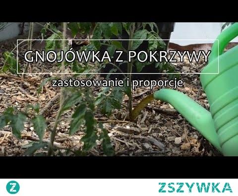 Gnojówka z pokrzywy proporcje i zastosowanie | www Kasia in