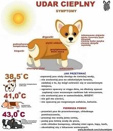 Udar cieplny u psa