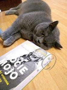 Jak żyć z kociakiem tak, by...