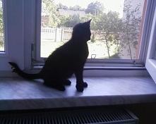 obserwacja ptaka
