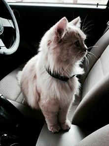 Modny kociak <3