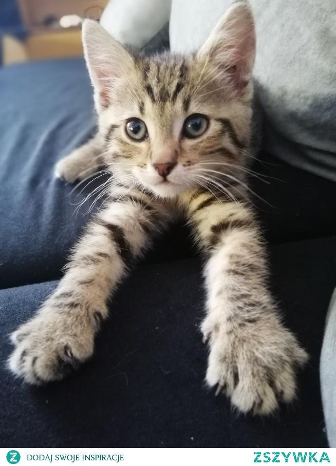 Mam tego szkraba w domu od miesiąca i wciąż nie mogę znaleźć odpowiedniego imienia. Jest to koci chłopiec, bardzo lubi się przytulać, ale jeszcze bardziej gryźć i drapać. Jest to aniołek, diabełek i ninja w jednym ;) Jest też wielkim łasuchem, a jego najlepszym kumplem jest lodówka ;) Chętnie poznam Wasze propozycje imion dla kocurka :)