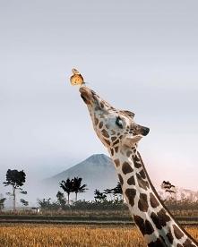 Żyrafka ^^