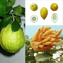 Owocowy kalejdoskop - spraw...