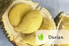 Durian - śmierdzący owoc tr...