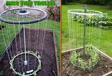 Ogród, warzywniak, garden