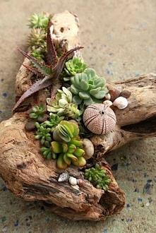 Garden, ogród, drzewo, sukulenty