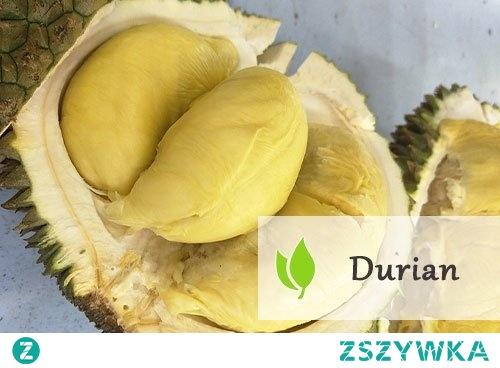 Durian - śmierdzący owoc tropikalny