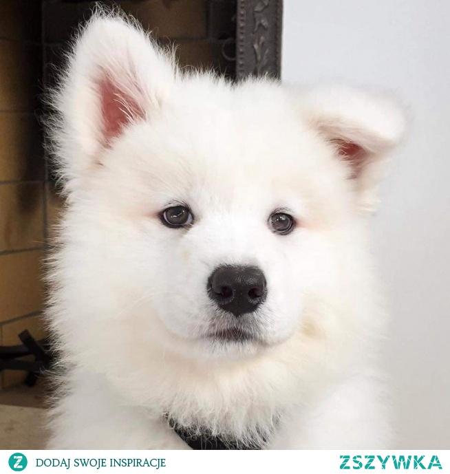 Cute:*