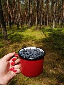 Piękne poranki w polskich lasach ❤️