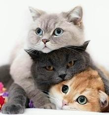 Kociaczki