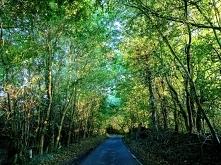 Zielona droga w niepozornej...