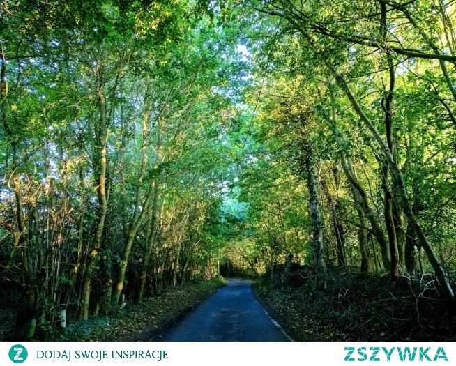 Zielona droga w niepozornej Anglii